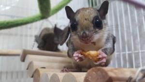 Kamikaze Squirrels